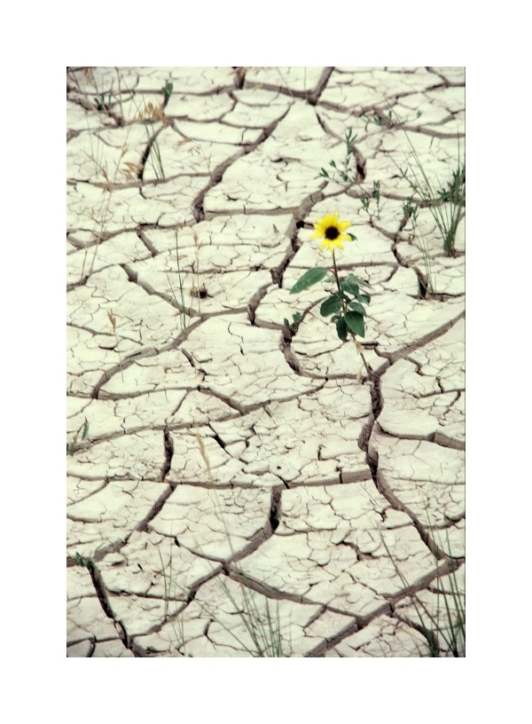 dry land and flower
