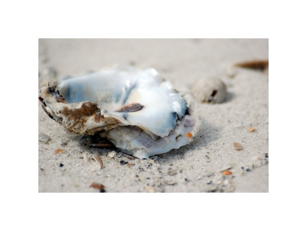 oyster shell beach SanBlas Panhandle