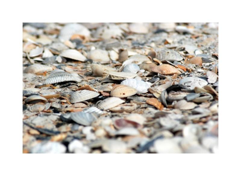 seashells beach SanBlas Panhandle