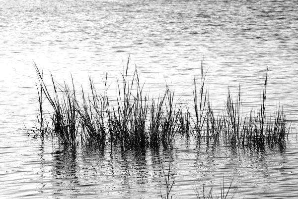 CapeCod Marshgrass