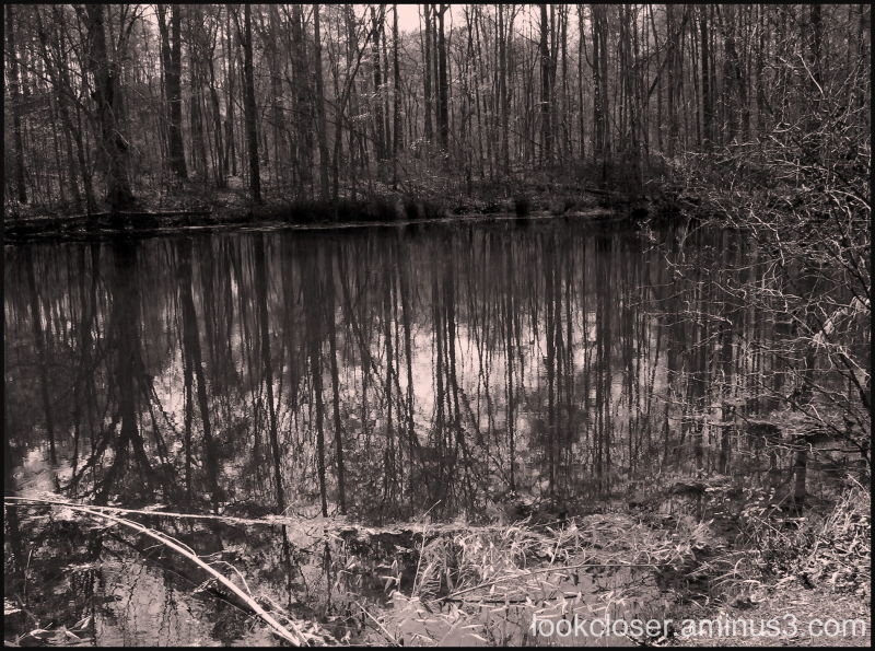 reflections sepia water trees