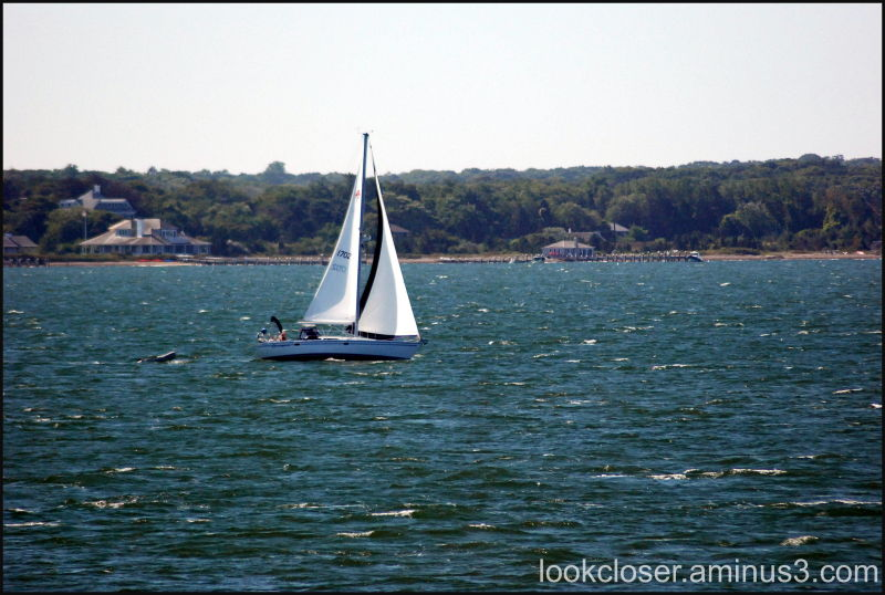 sailboat CapeCod