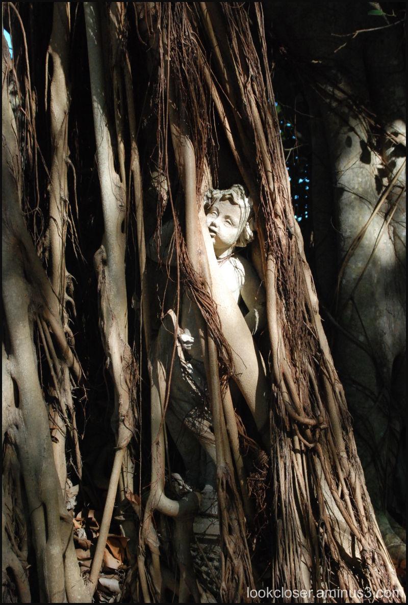 statue Banyan Ringling Sarasota