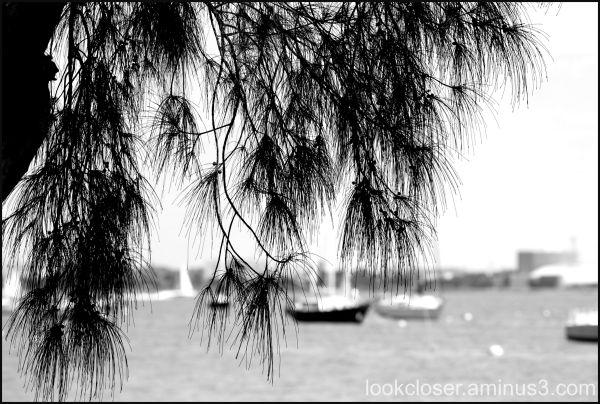 bw pine bay