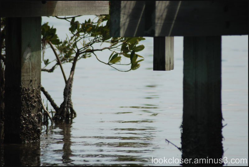 mangrove bridge water