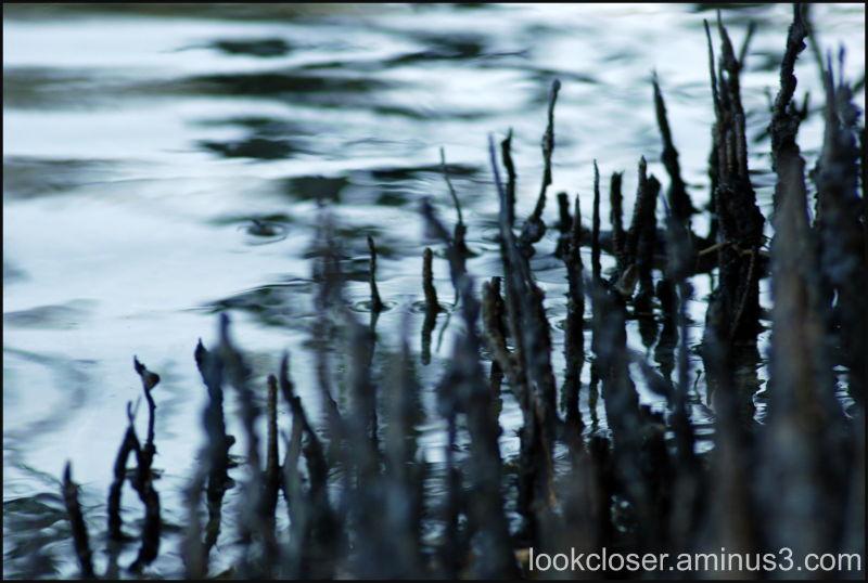 mangrove shore
