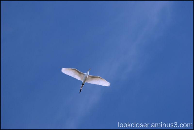 white bird blue sky