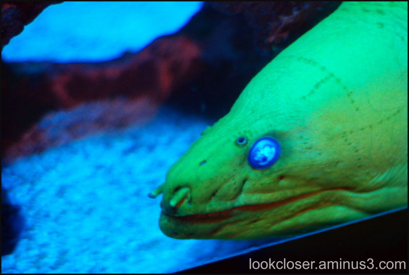 Mote Marine Moray fish aquarium
