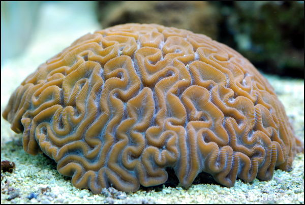 Mote Marine coral aquarium