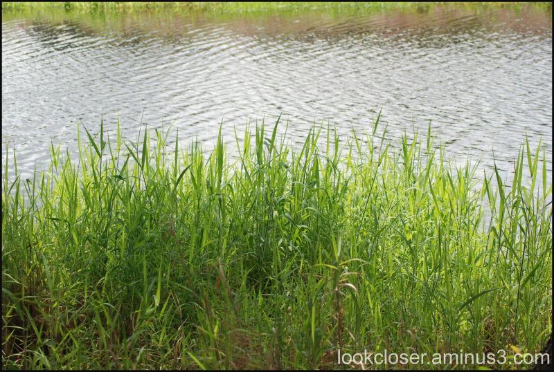 Myakka water's edge