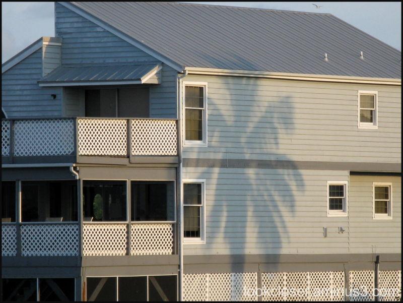 beach house palm shadow
