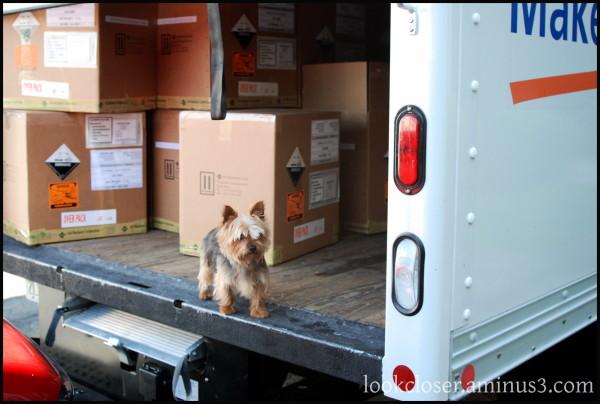 SF dog moving van