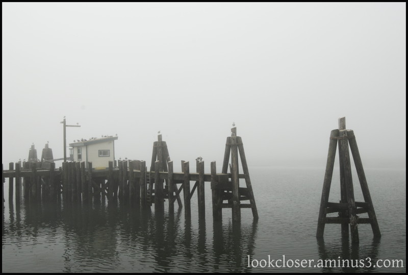 California Bodega Bay Fog