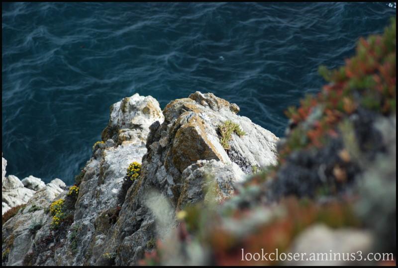CA Bodega Bay coastline