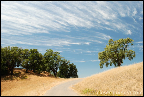 CA Sonoma country-road trees