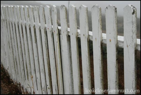 CA Pt.Reyes fence fog white