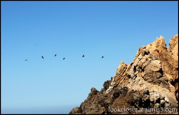 CA BigSur PfeifferBeach sky rock pelicans
