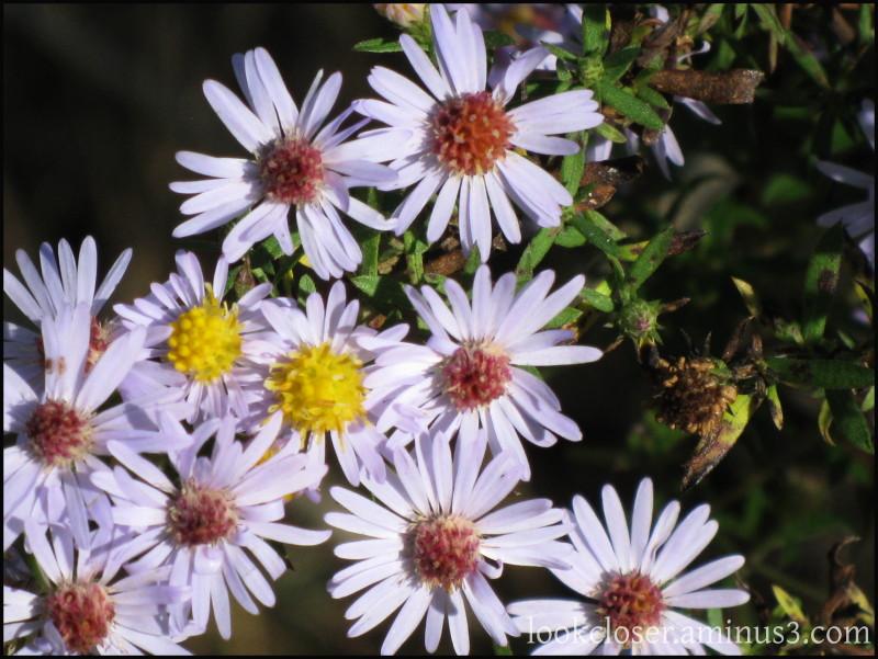 LA autumn wildflowers