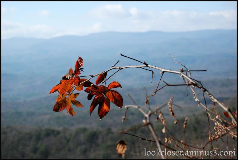 GA Ellijay Amicalola-Falls Autumn