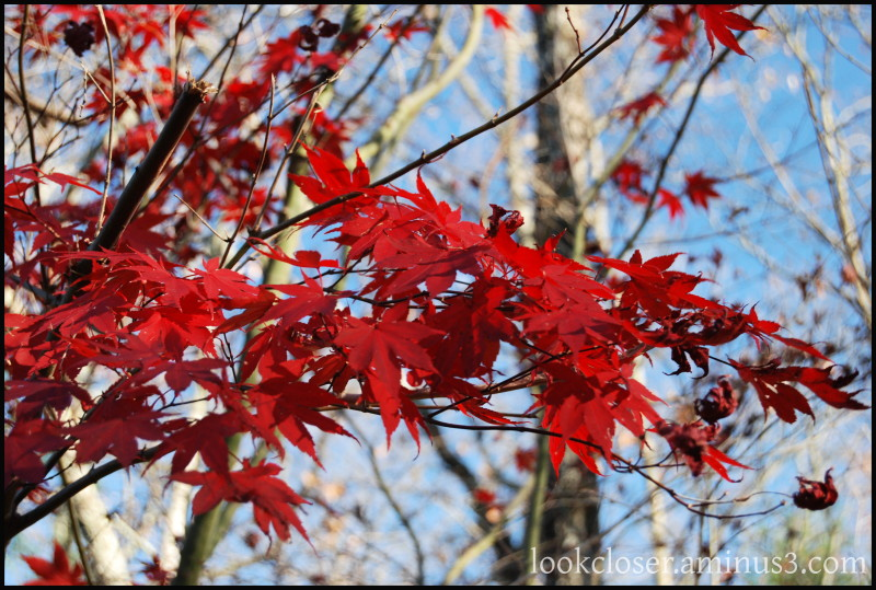 GA Ellijay Autumn