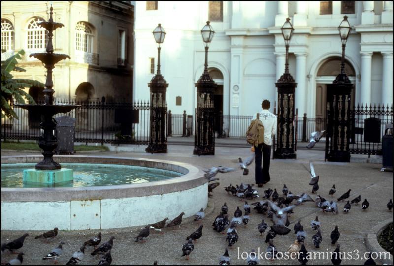 NOLA walking pigeons Square