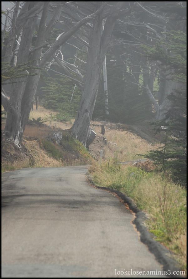 CA fog woods road