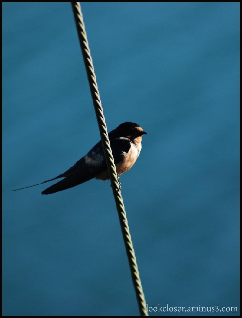 CA bird