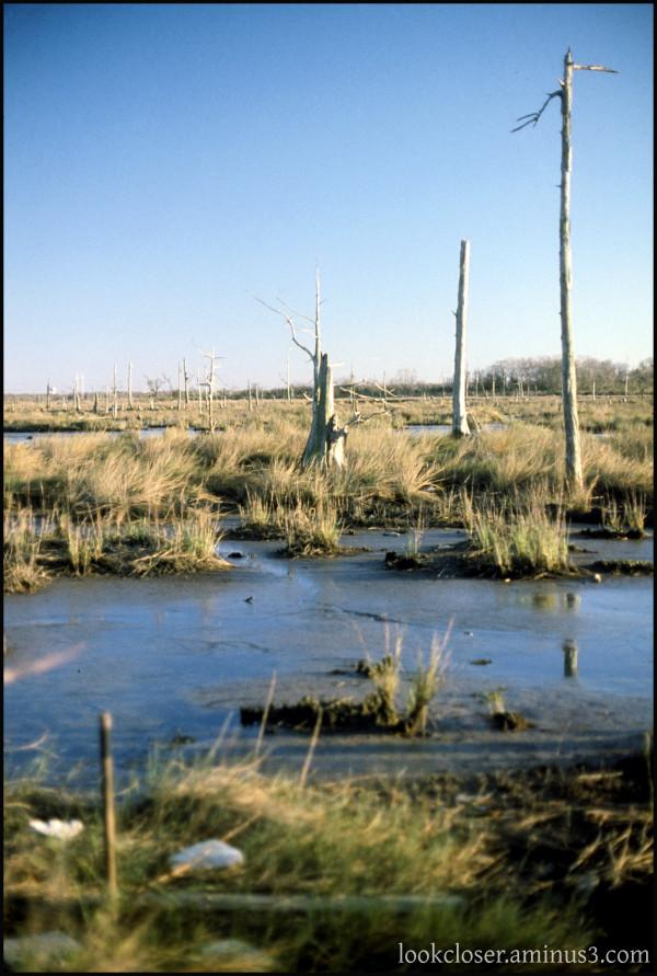 LA NOLA cypress wetland prairie