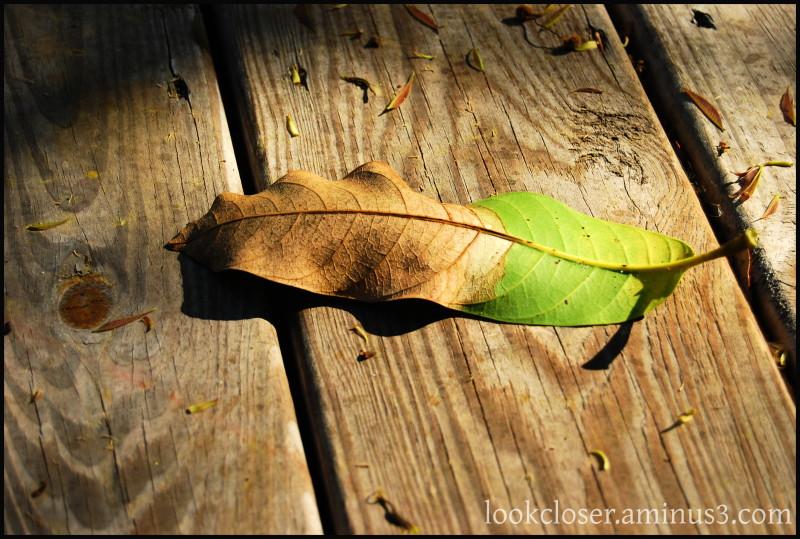 Backyard leaf deck home