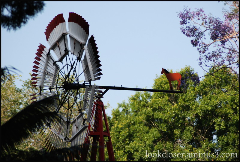 Neighborhood FL windmill