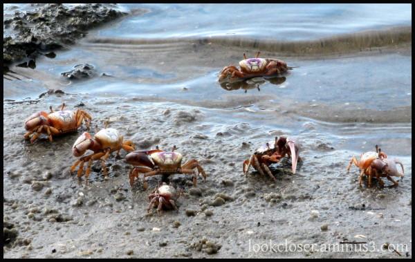 crabs crustaceans FL solidarity