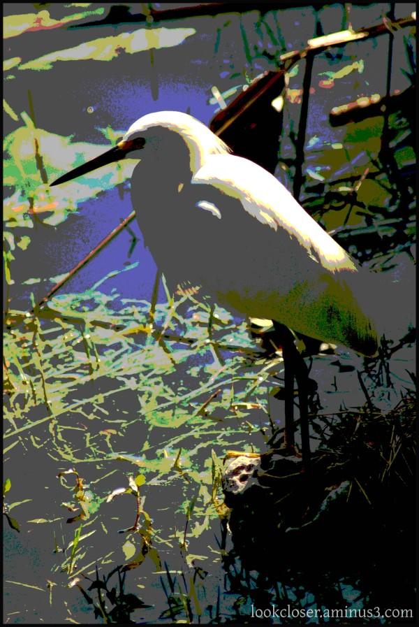 FL posterized egret