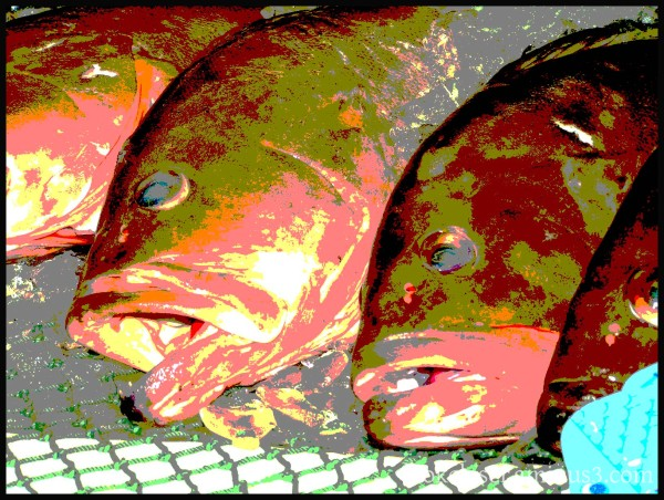 FL posterized groupers fish solidarity