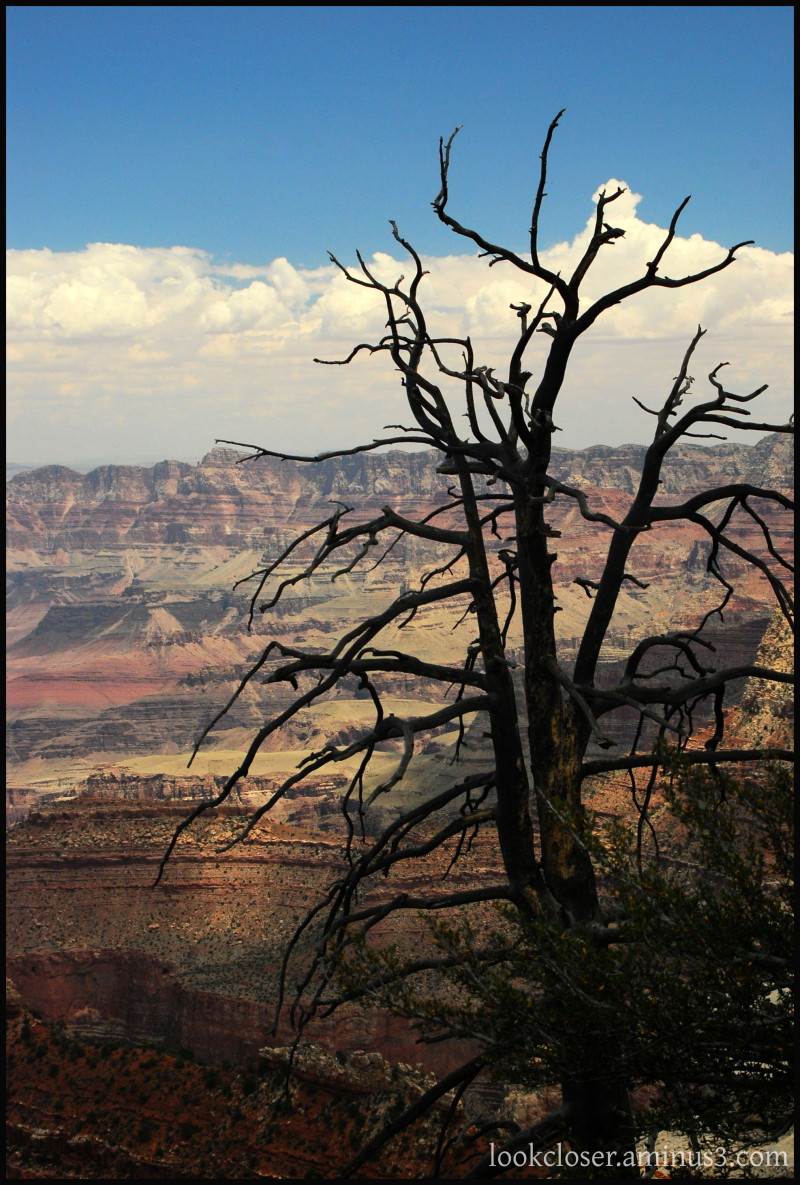 Grand-Canyon AZ West dead-tree