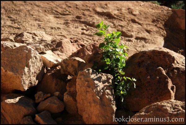Grand-Canyon AZ West BrightAngel trail