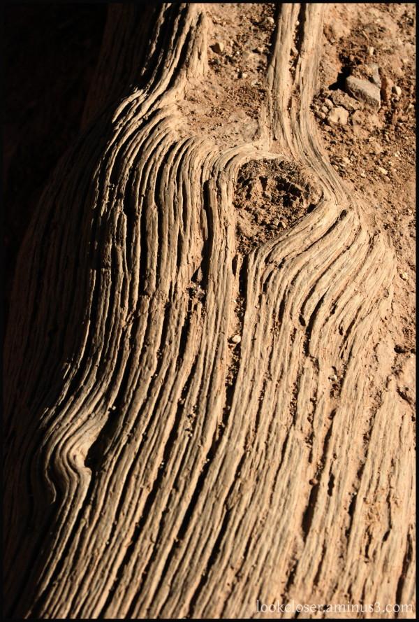 Grand-Canyon AZ West BrightAngel trail wood