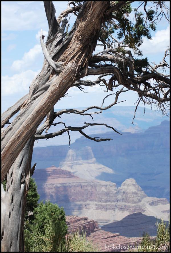 Grand-Canyon AZ West South-Rim Trail branches