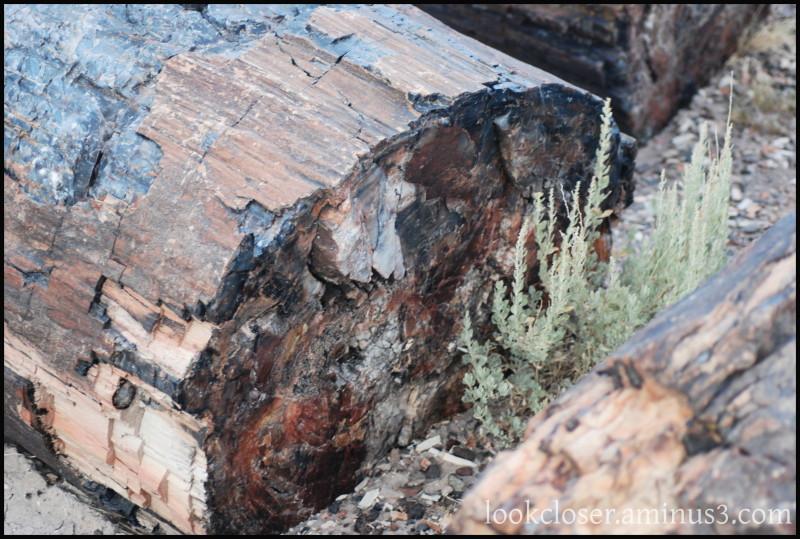 Petrified-Wood AZ West