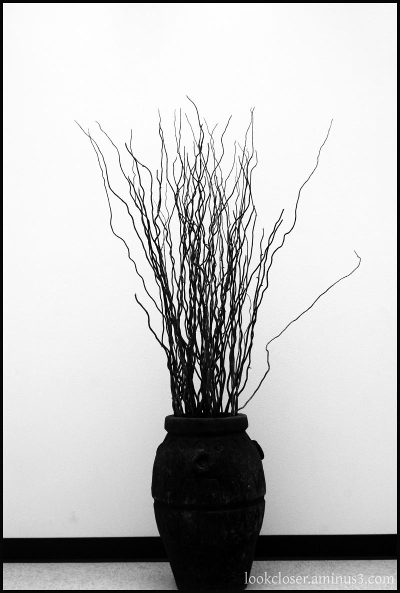 vase branches Southwest BW