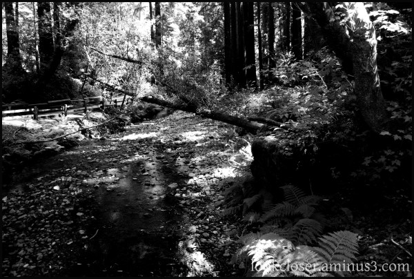 Muir-woods CA  path bw