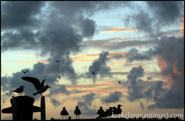 twilight sunset gulls dock KeyWest FL