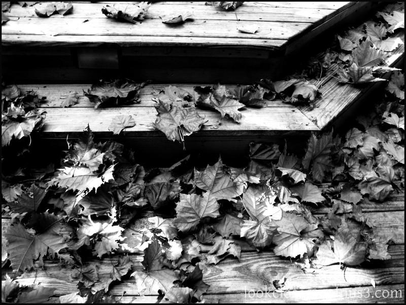 Bradenton home autumn leaves deck BW