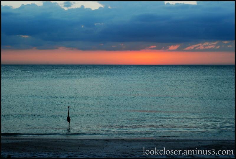 FL heron sunset solitude