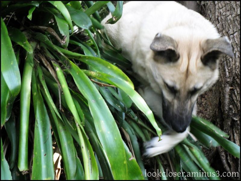 Dini dog home hunting