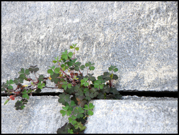 green clover wall apalachicola FL