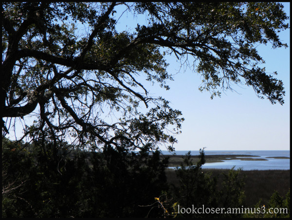 oak marsh gulf cedarkey fl