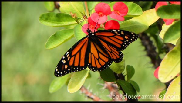 butterfly Easter resurrection
