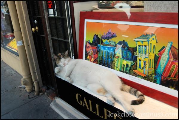 NOLA lazy sleep cat window art