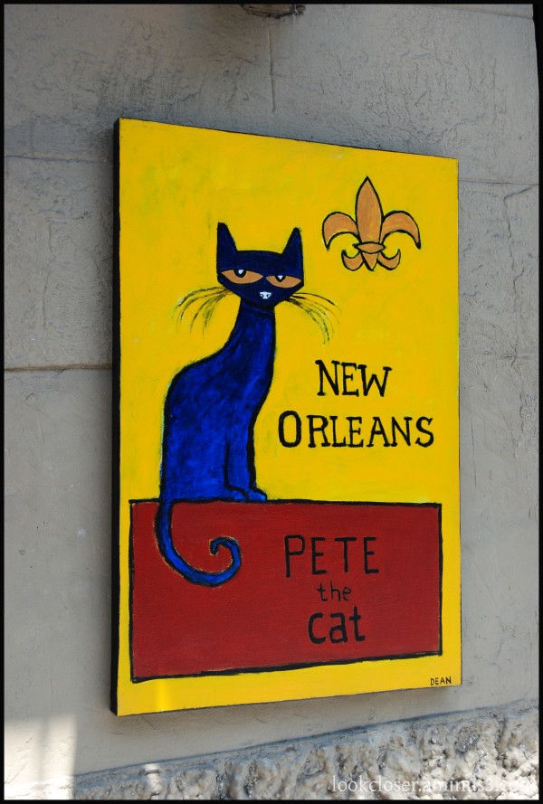 NOLA art cat painting French-Quarter