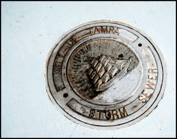Tampa storm drain cover ship